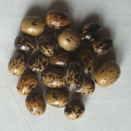 TAGUA 15 Perles en Pona du Pérou